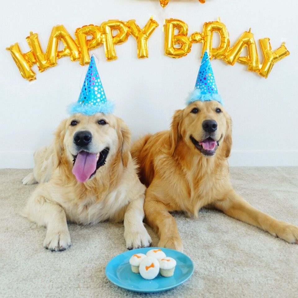 Two dogs in happy birthday hats
