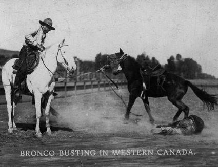 Old West horse breaking