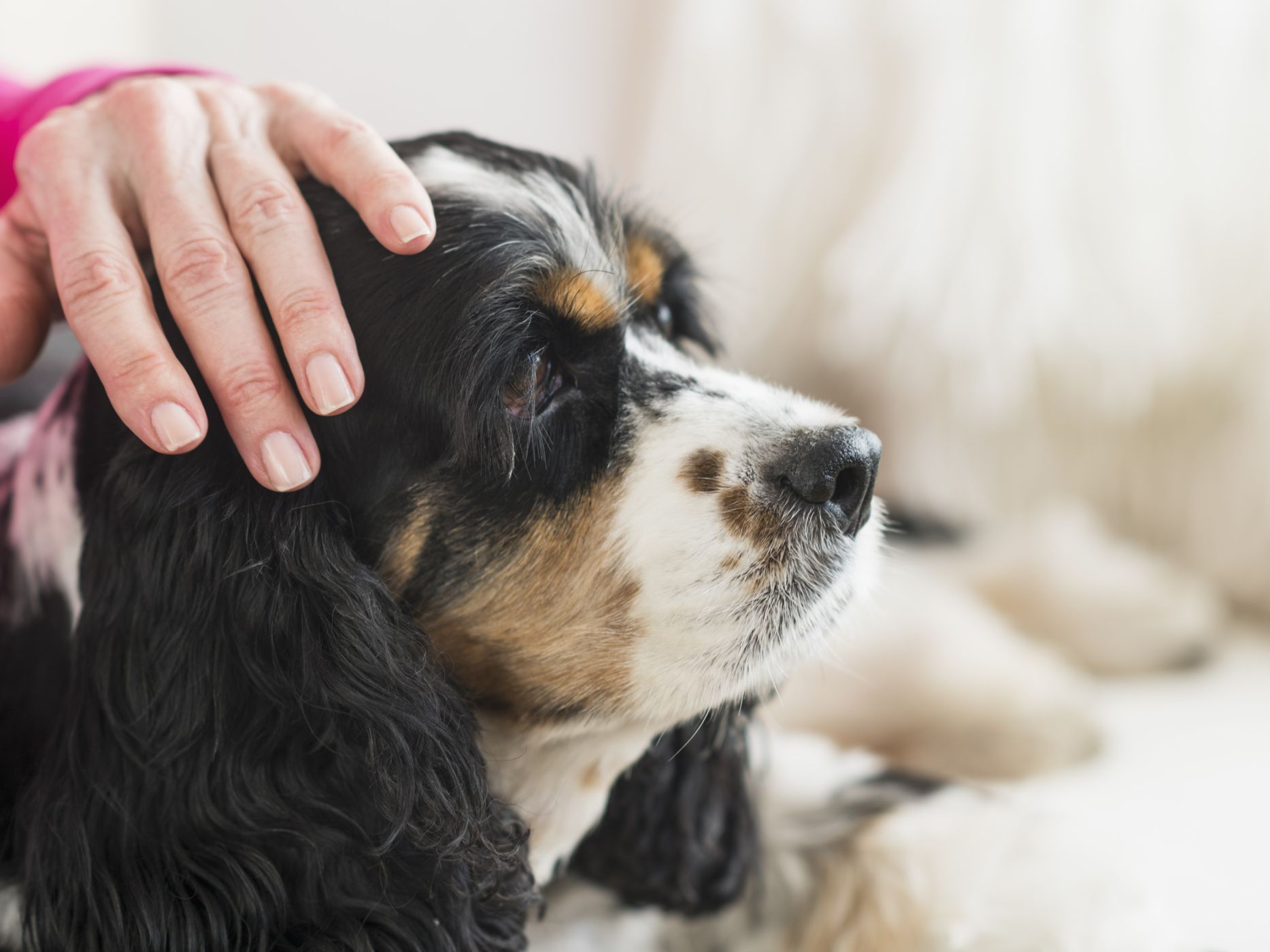 Signs And Causes Of Arthritis In Dogs