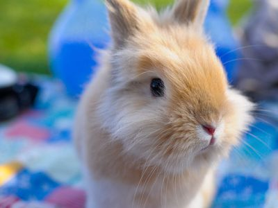 Common Problems And Issues In Rabbit Eyes