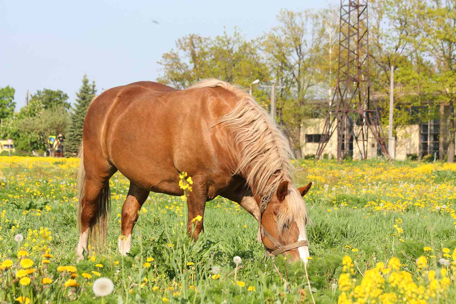 Techniques for Introducing Your Horse to Pasture
