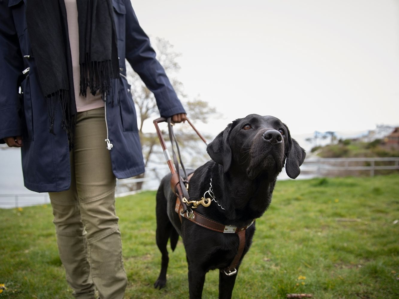 7 Types of Working Dogs and the Jobs They Do