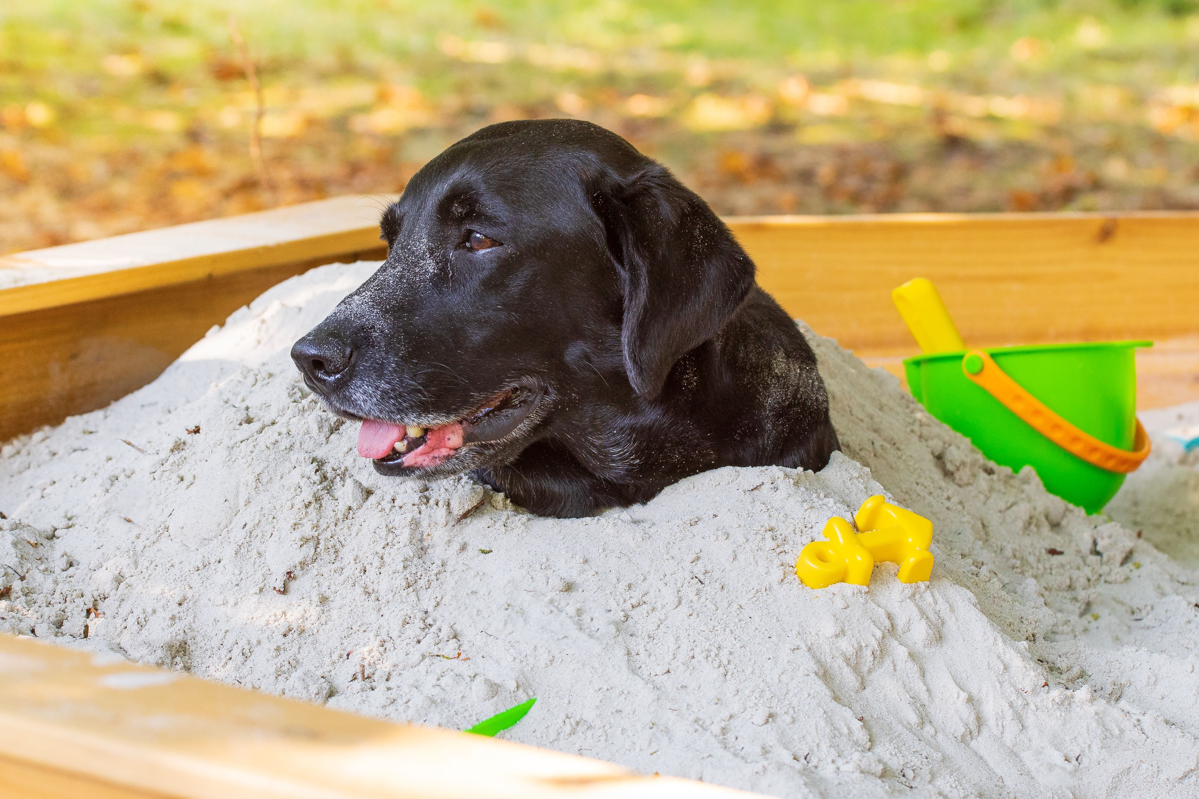 A Dog Plays In Sand