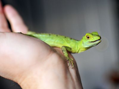 Exotic Pet Names That Start With L
