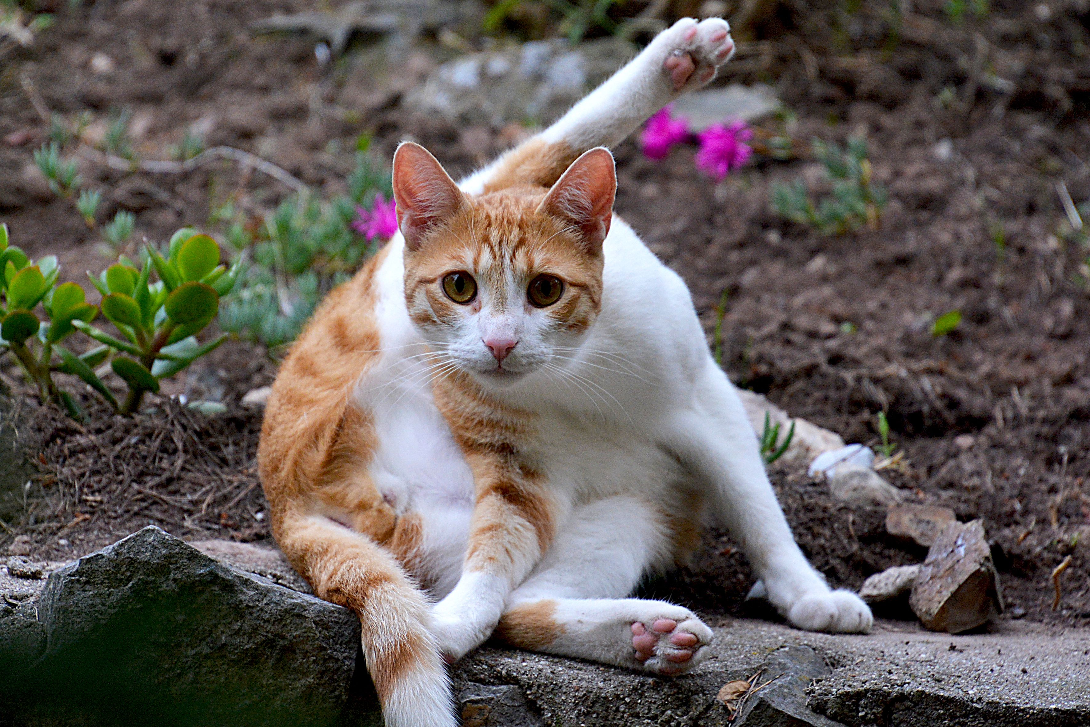 Cat Grooming Understanding Why Cats Groom Themselves
