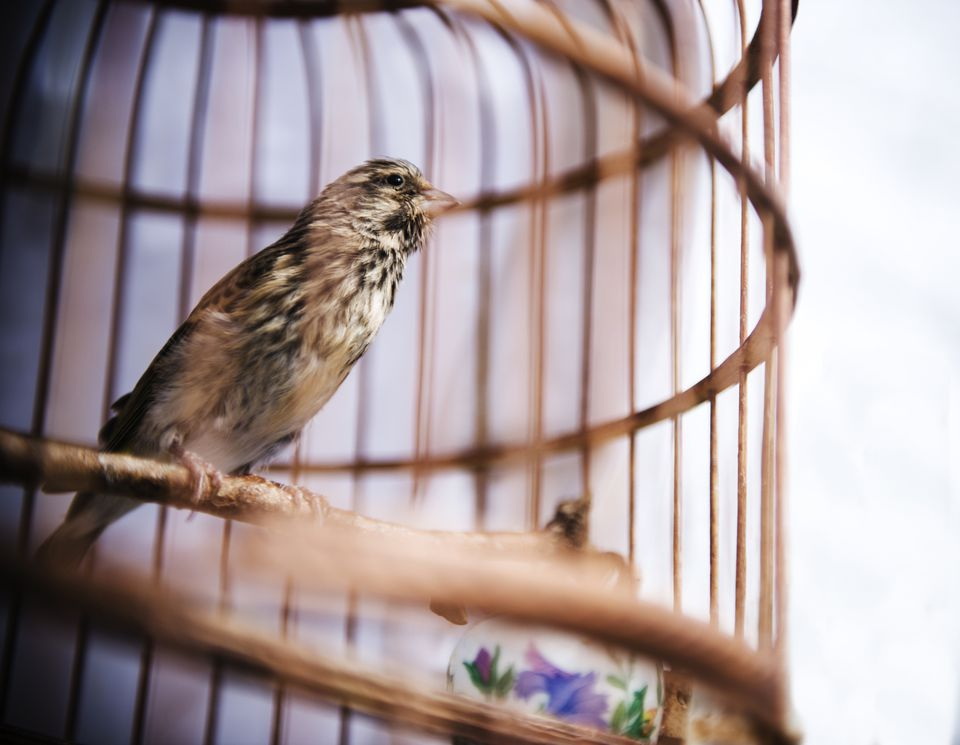 Bird sitting in a round orange cage