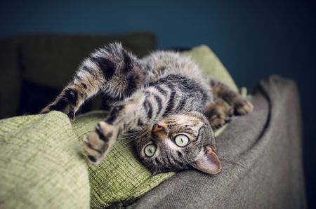 Behavior Changes to Watch out for in Cats