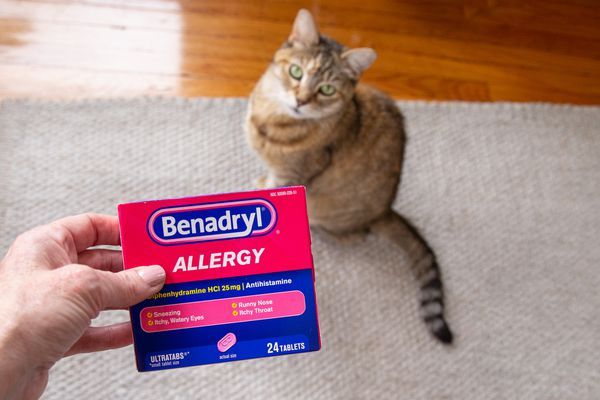 Benadryl allergy box held up in front of brown and white cat sitting on a tan rug