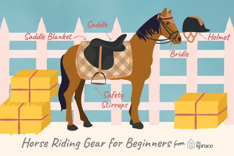 illustration of basic horse riding gear for beginners.