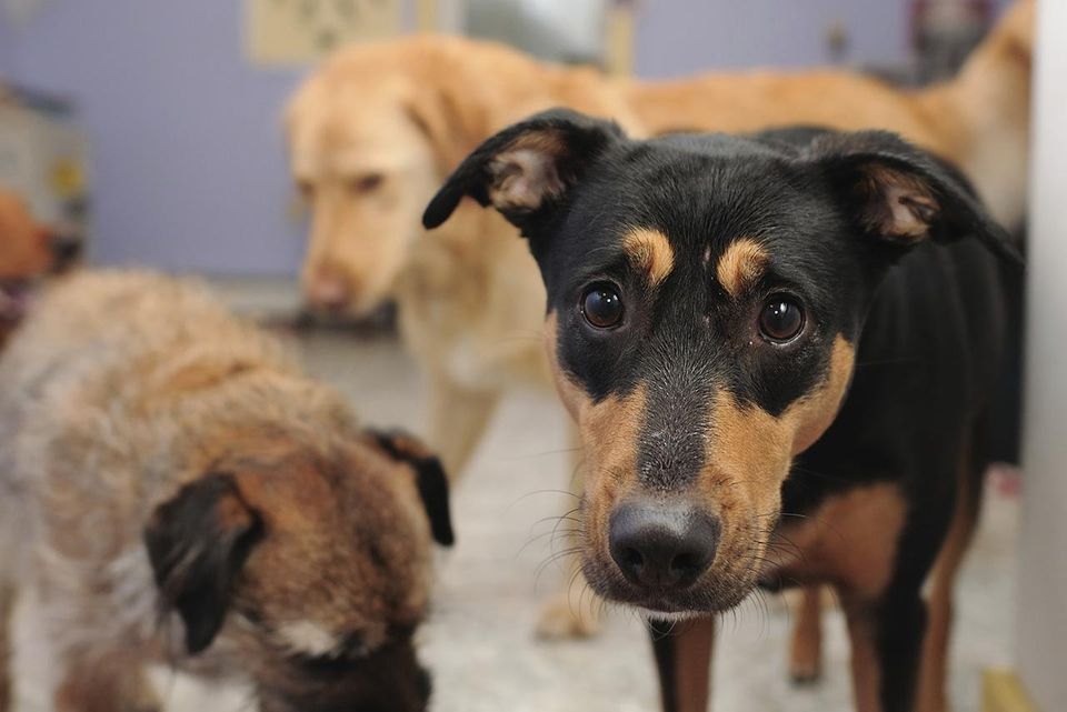 Dogs at a shelter waiting adoption