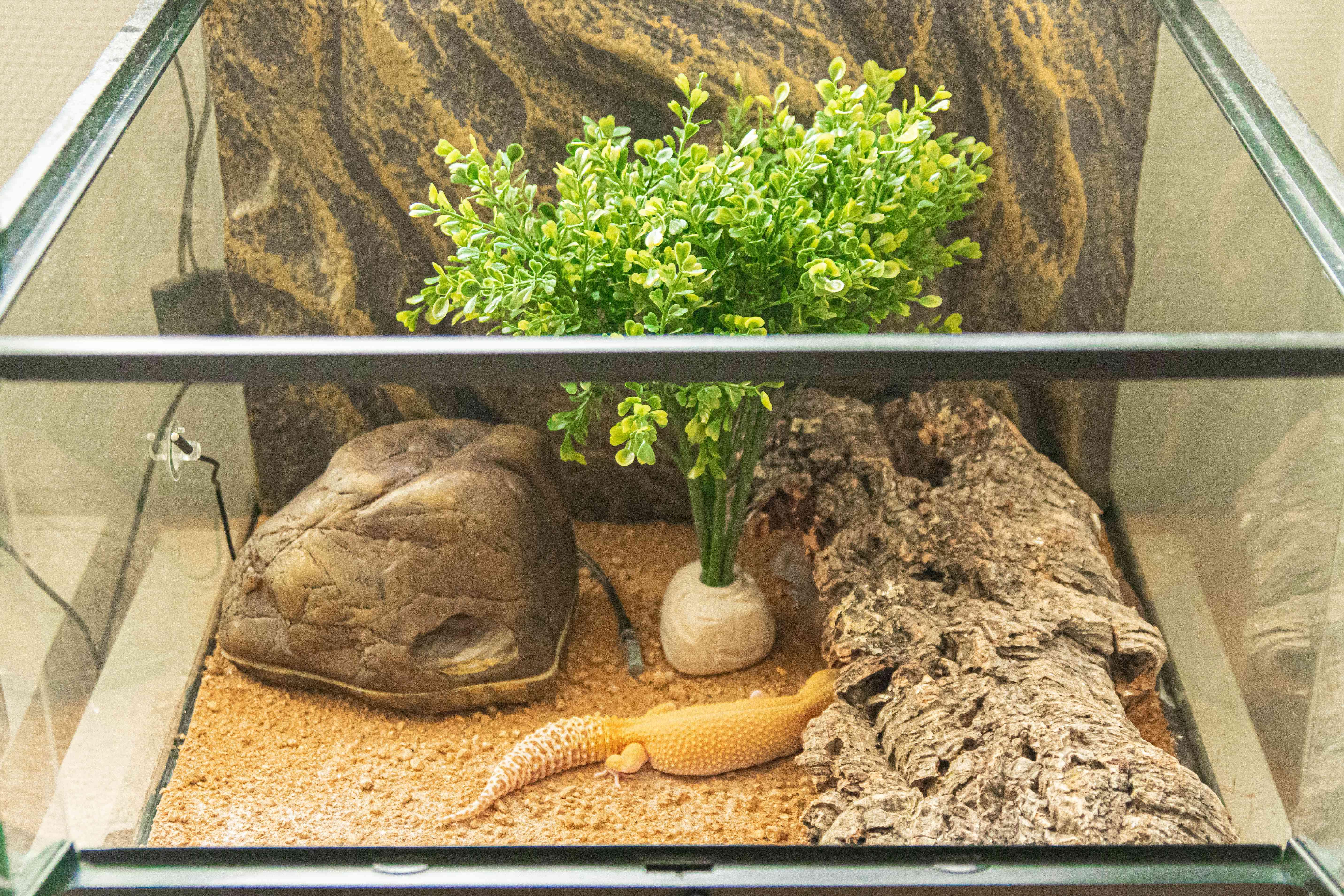 leopard gecko's habitat