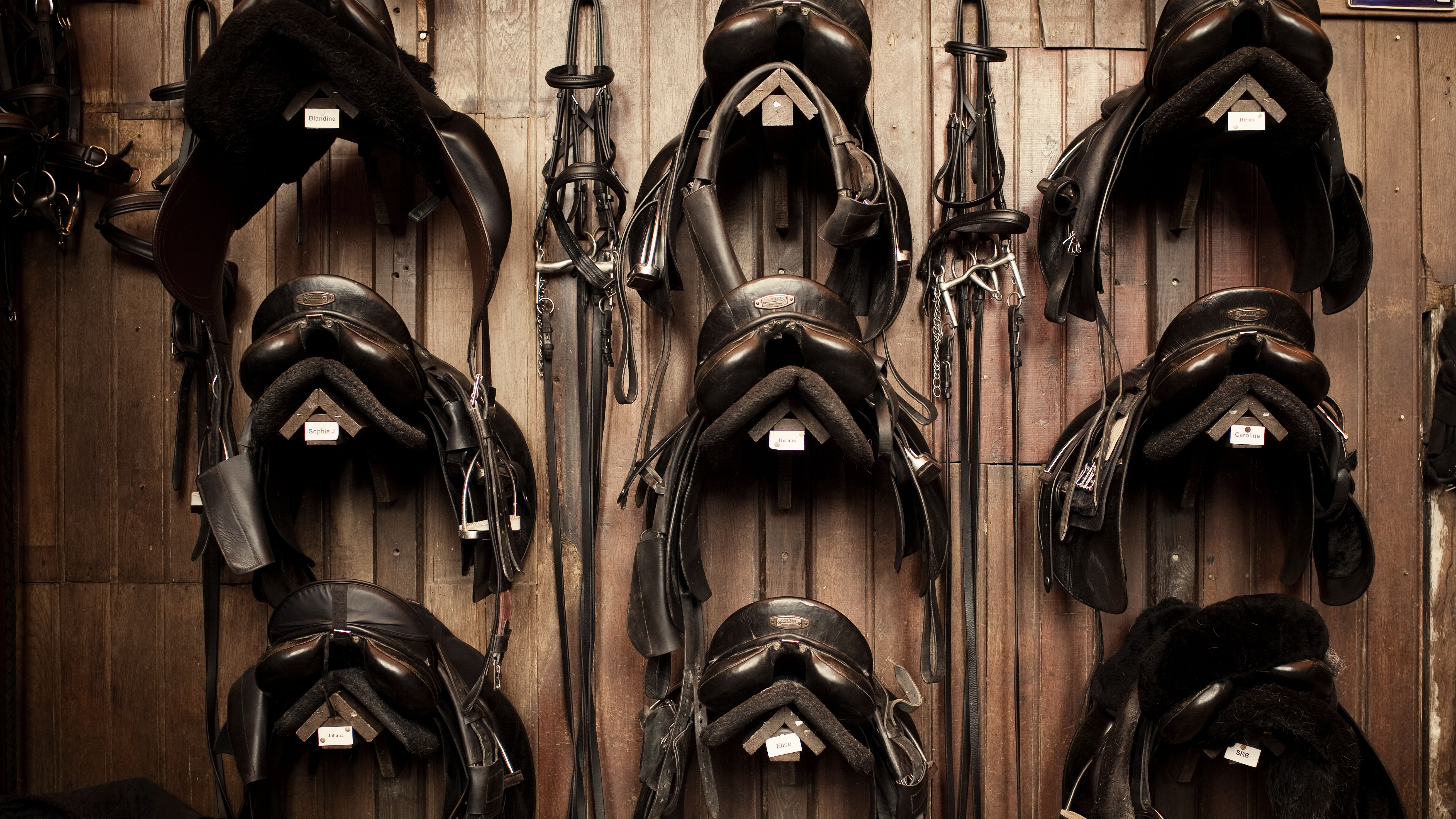 Horse Tack Definition And Uses