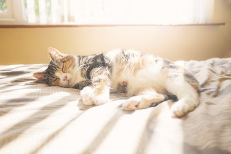 Are Calico Cats Always Female?