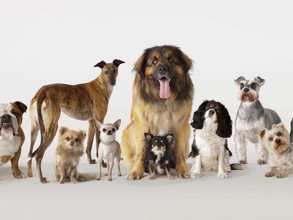 7 Types of Dog Breeds