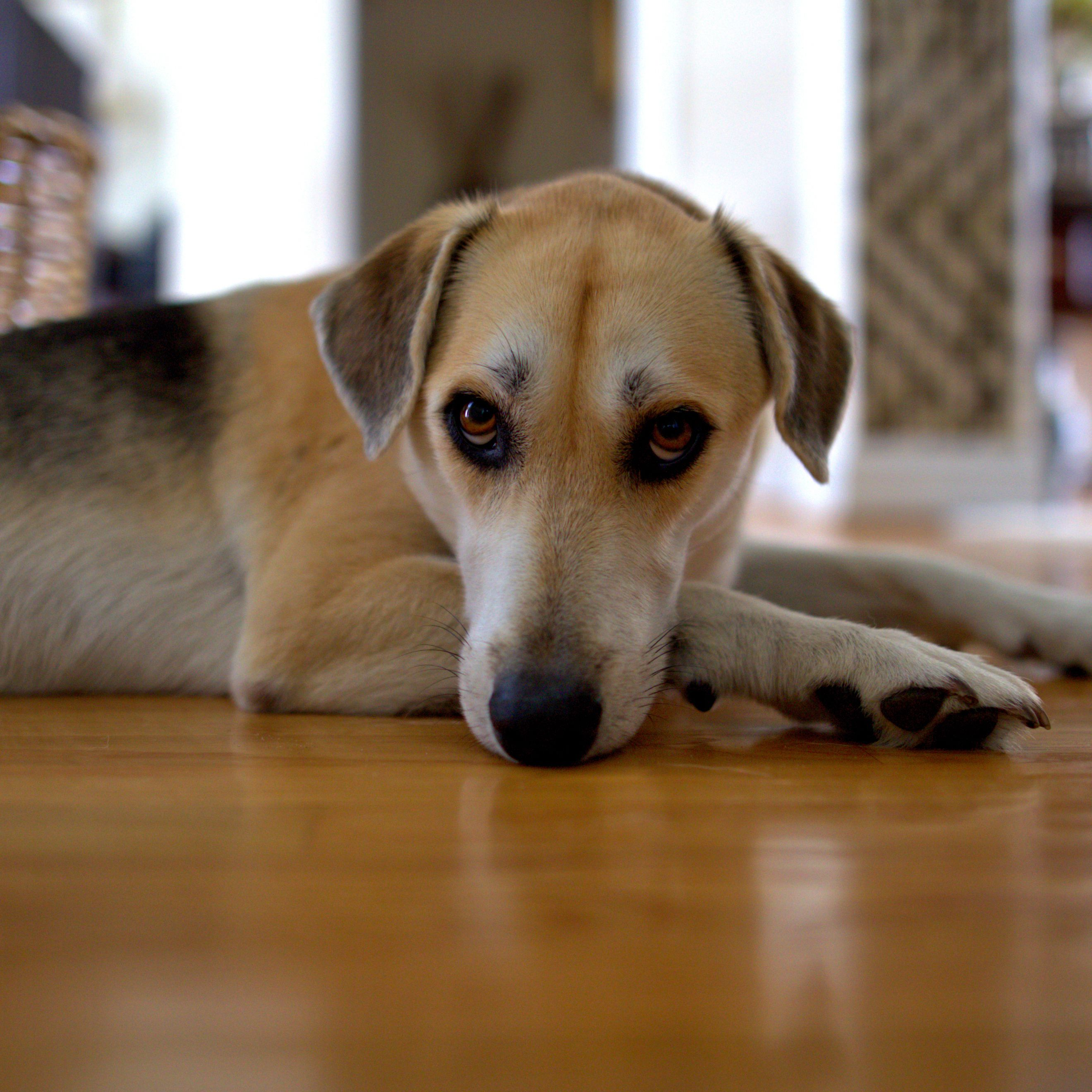 Why Your Dog Whines and How to Stop