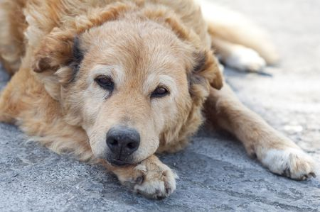 What To Do If Your Dog Is Leaking Urine