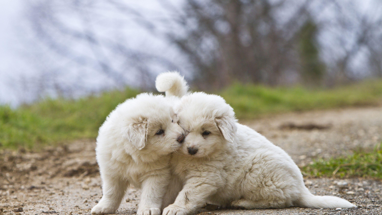 White Dog Breeds