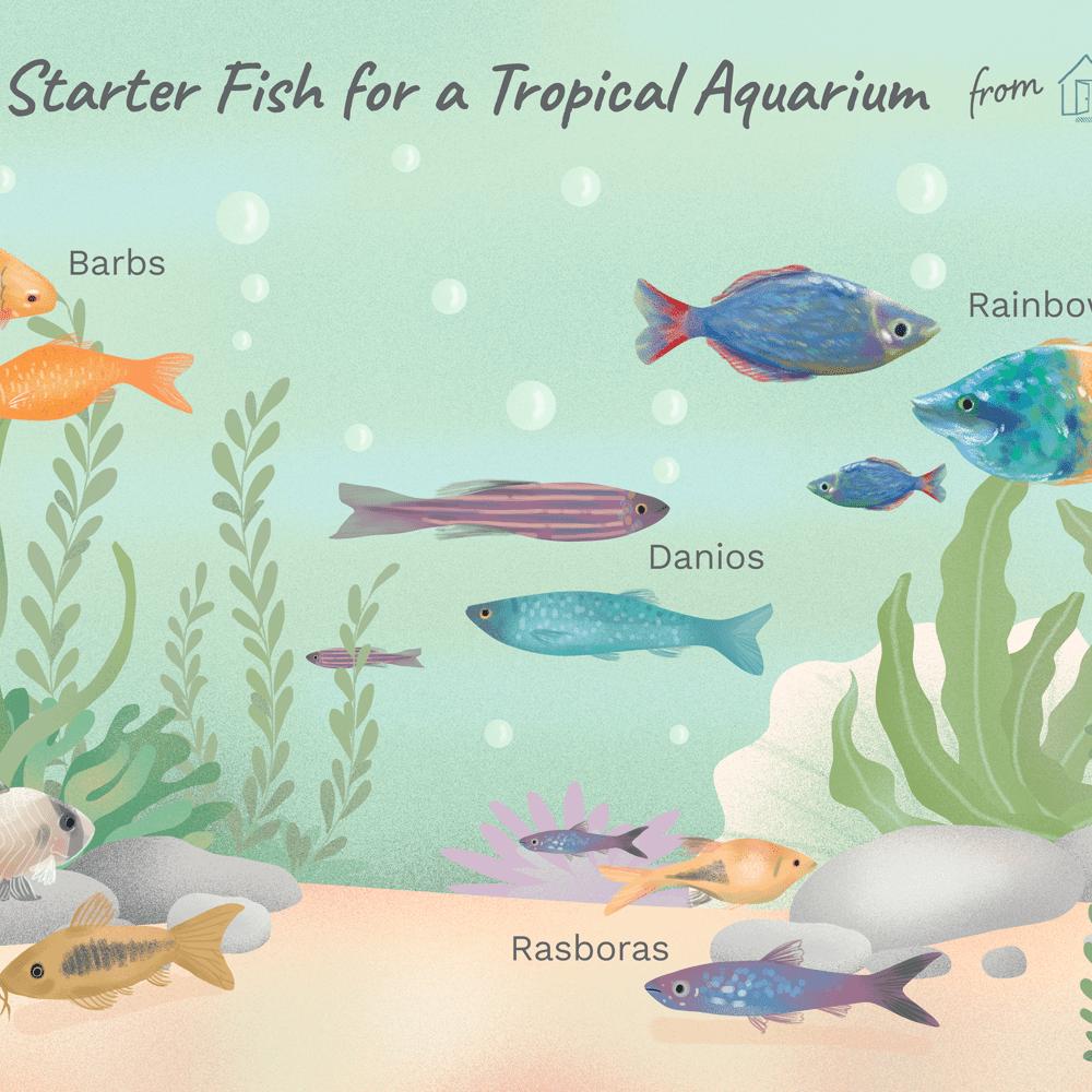 Good Fish For Starting A Tropical Fish Aquarium