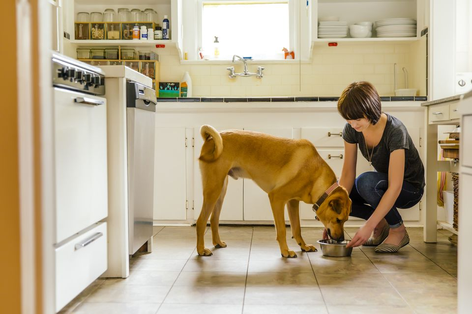Woman feeding a dog in a kitchen