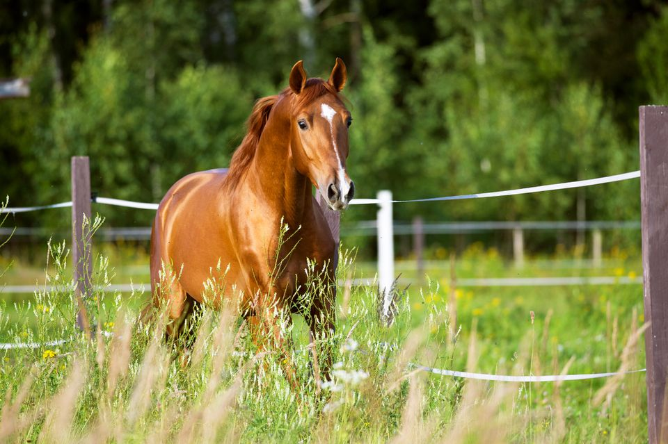 Red horse runs trot on the nature background