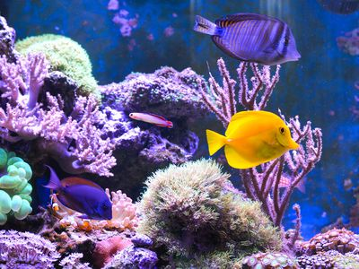 Nitrogen Cycle In A Marine Saltwater Aquarium