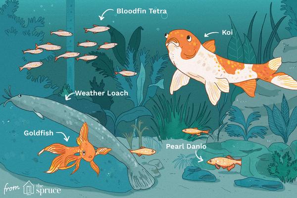 cold water fish illustration