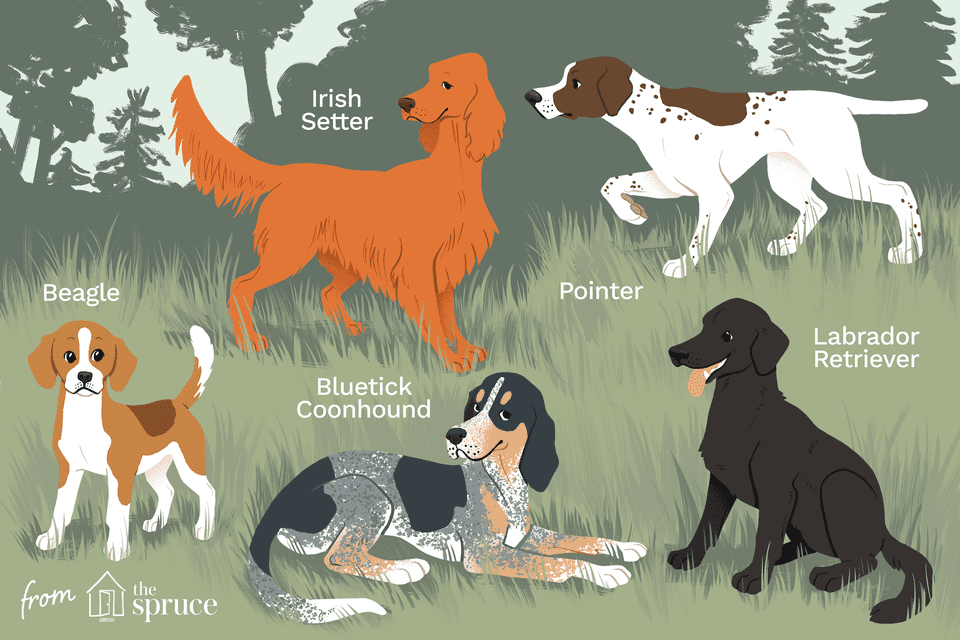 mejor ilustración de perros de caza