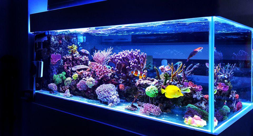 Home aquarium setup