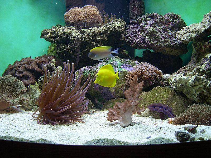Tanque de arrecife de 92 galones