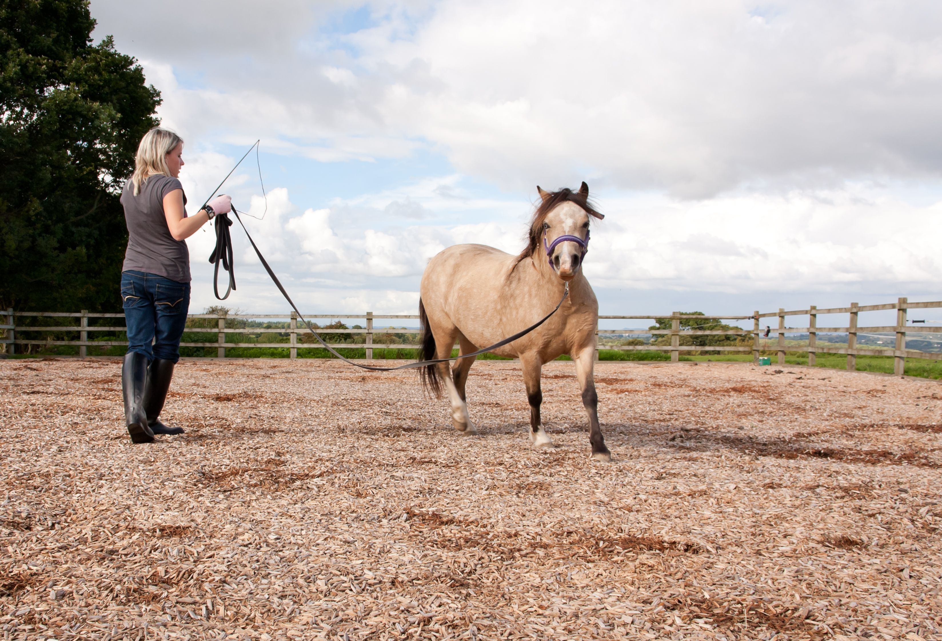 A horse trainer holding a whip instructs a young horse