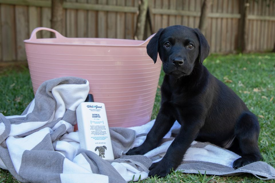 Black puppy sitting next to pink tub, towel and pet shampoo for bathing