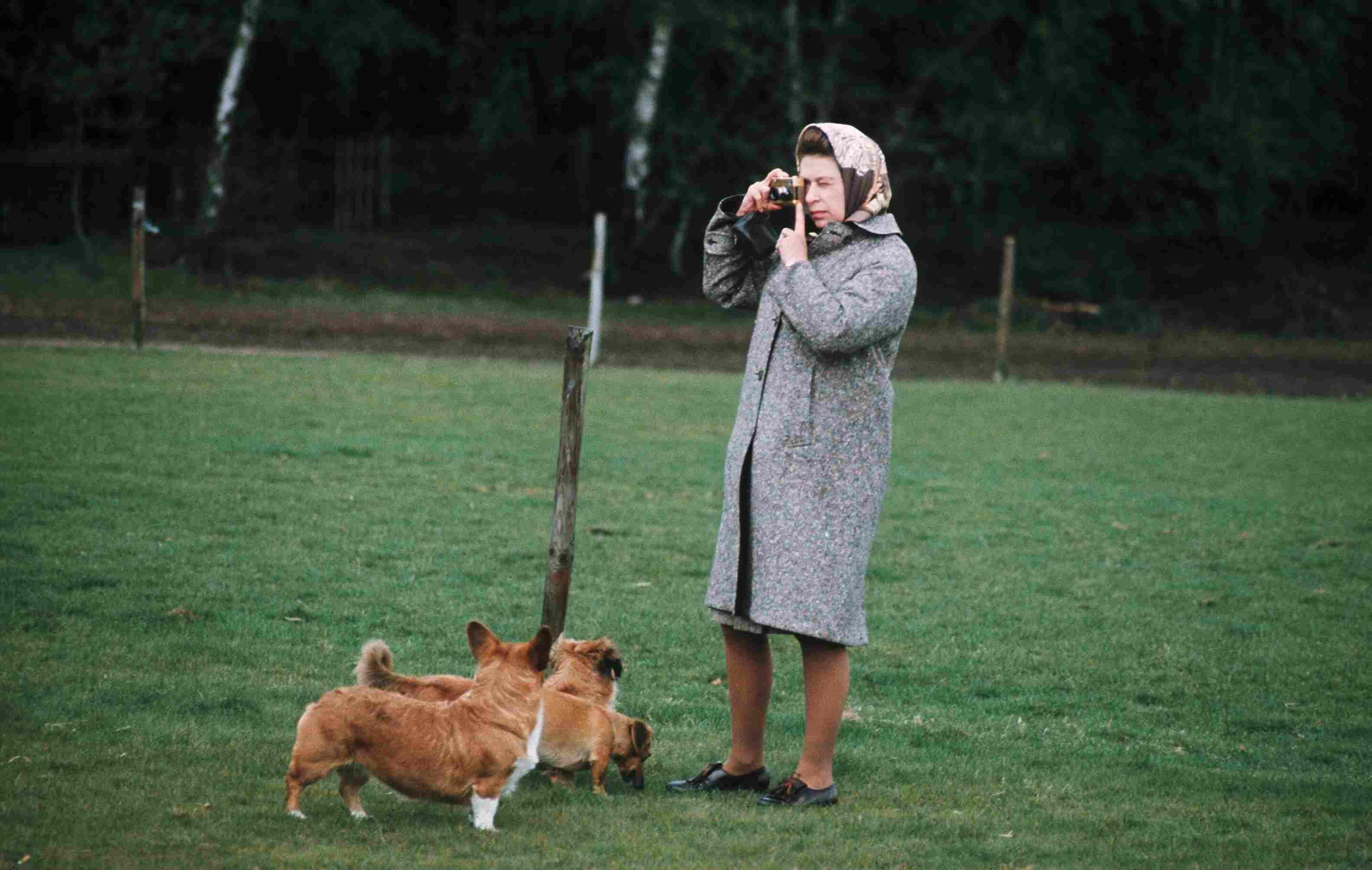 La reina Isabel II en Windsor Park fotografiando sus corgis en 1960, en Inglaterra.