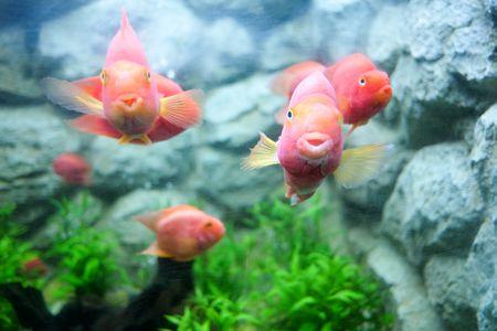 Tetracycline Use in Freshwater Aquariums