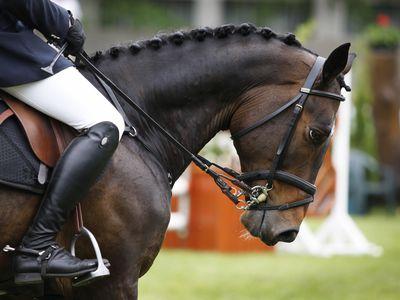 Choosing Nosebands for Horse Bridles
