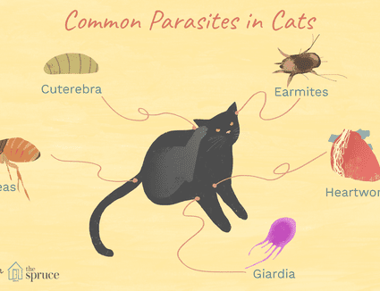 Treating Roundworms In Cats