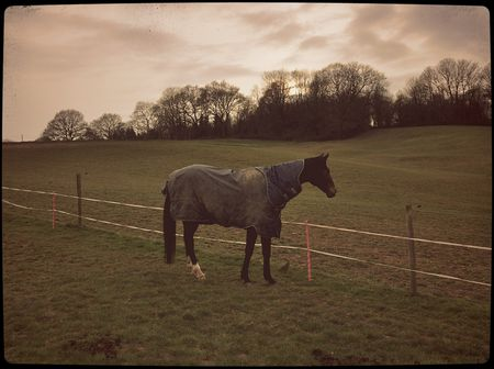 Horse Standing In Pasture Wearing Dirty Turnout Rug