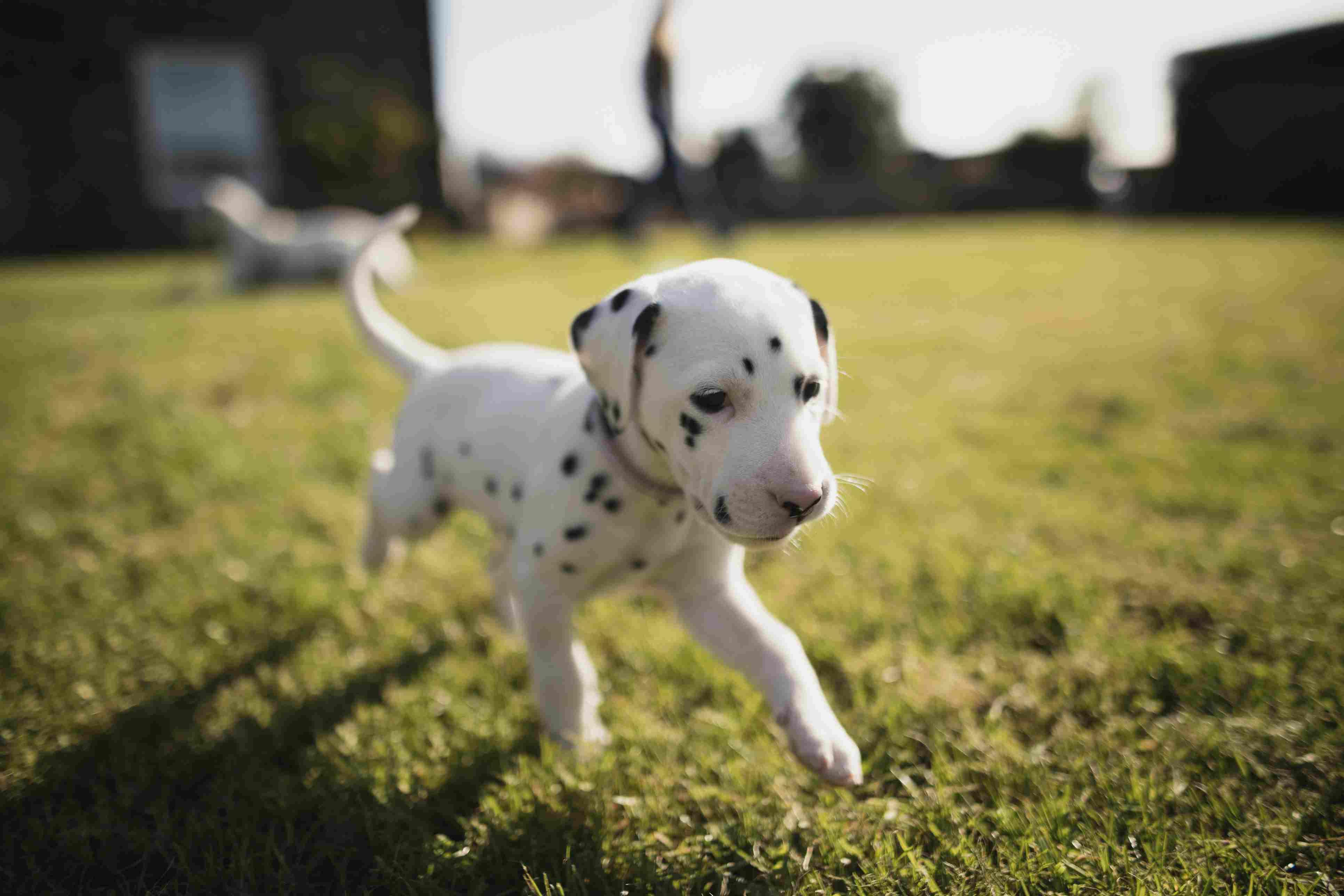 Cachorro corriendo en el jardín