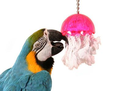 Understanding Why Pet Birds Have Flaky Beaks
