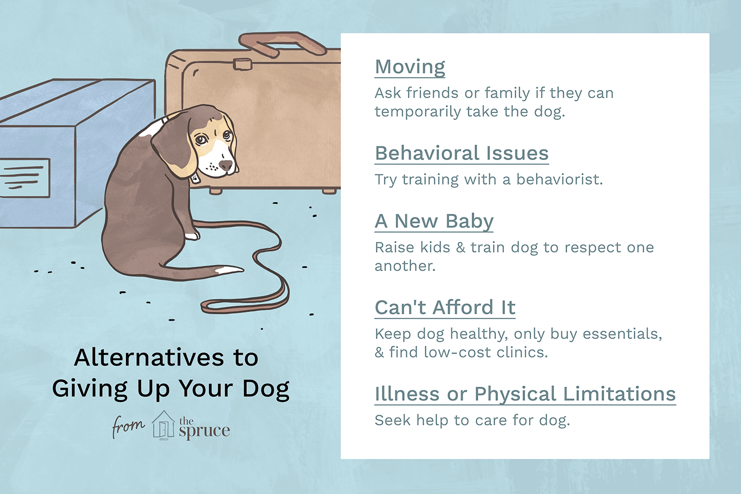 Reasons NOT to Give Up Your Dog