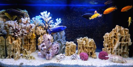 Animalerie Eclairage, Galeries Reef Aquarium Led Lighting Fish Tank Light Marine Aquarium Led Dimmable Light