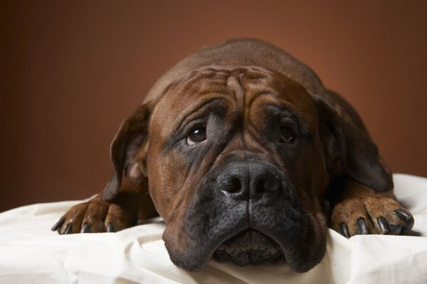 Sick-looking dog