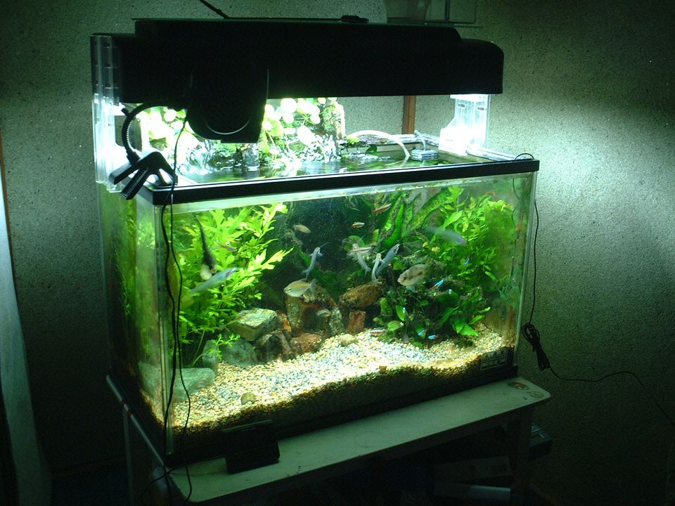 An aquarium in a dark room
