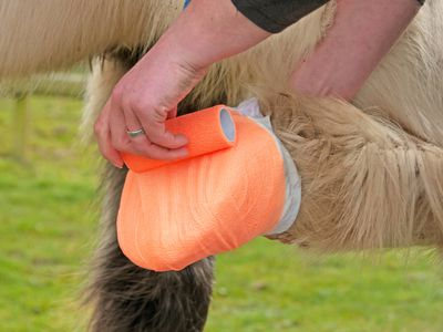 Treating Minor Horse Wounds