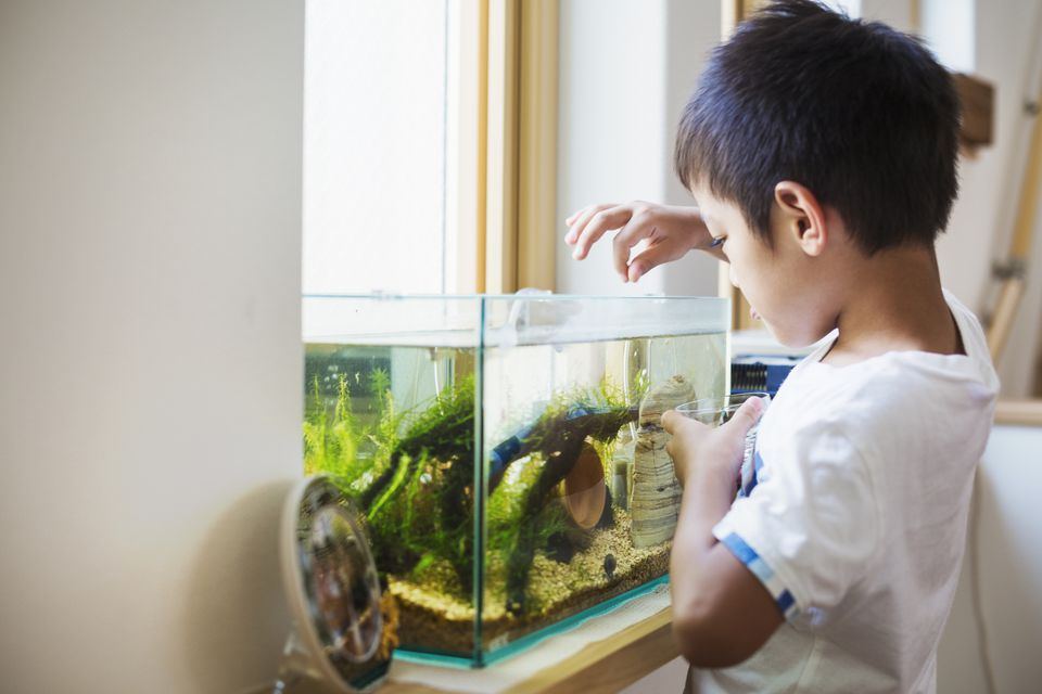 Young boy feeding tropical fish