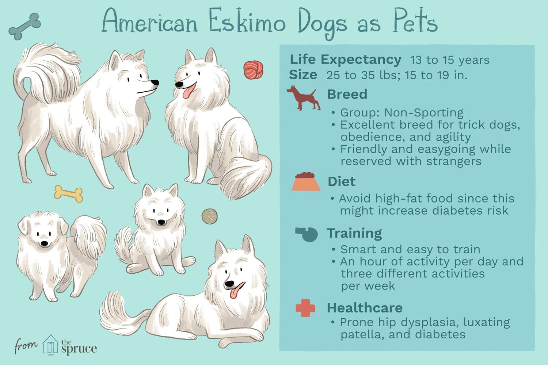 american eskimo dogs as pets
