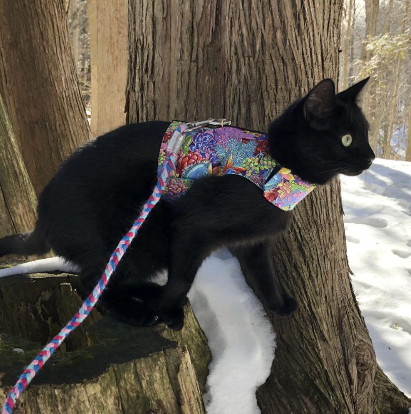 Custom Harness for Large Cats
