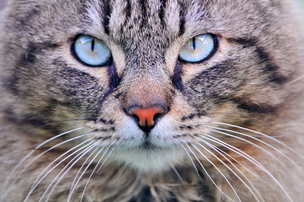 close up cat's face