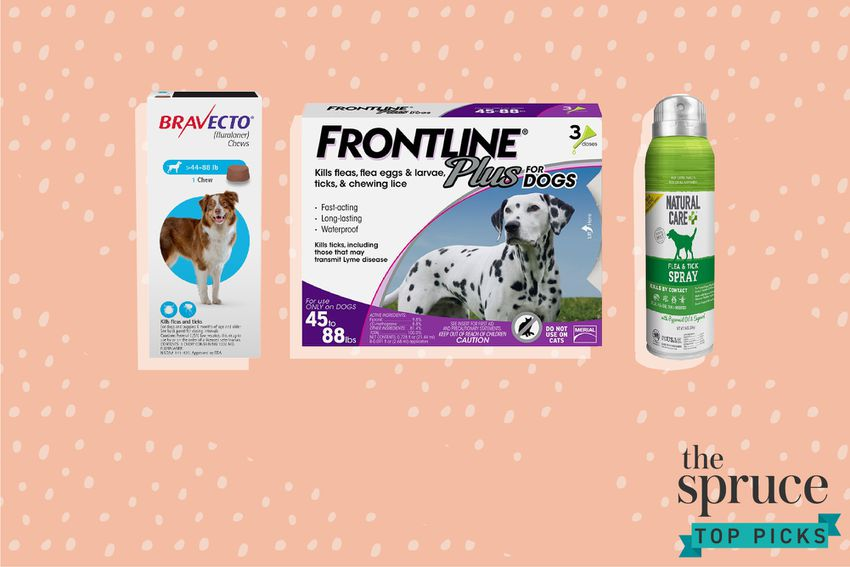 Best Flea and Tick Prevention Products