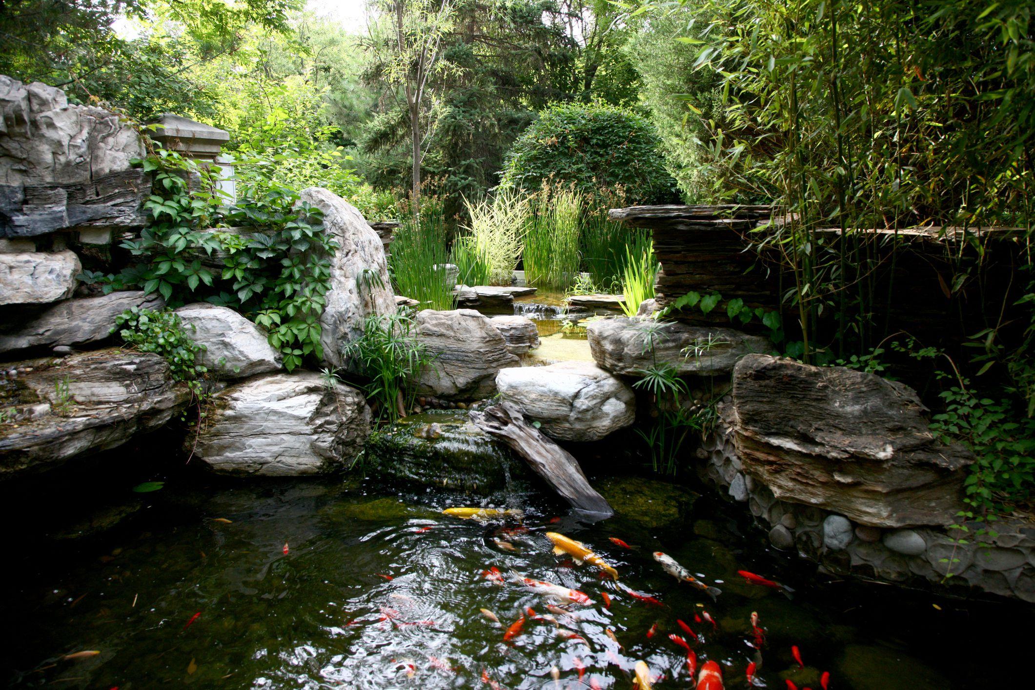 Aquarium Fish For Outdoor Fountains And Ponds