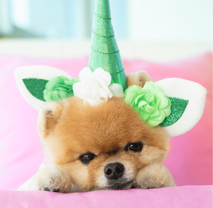 Jiffpom with unicorn horn.